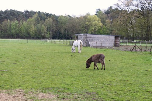 horses in field eating grass