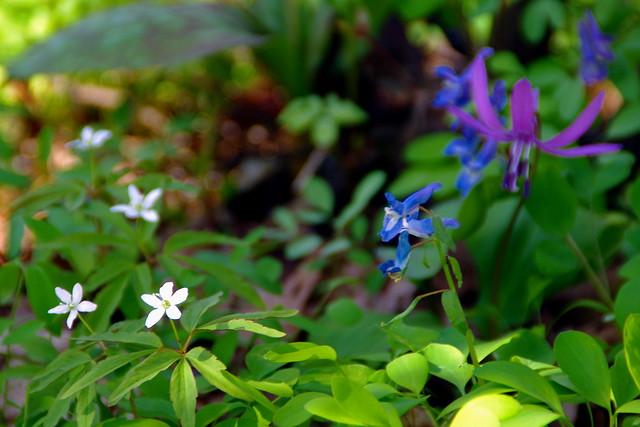 春の妖精2