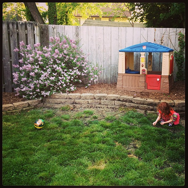 The lilac bush and their playhouse. Yay for not having to plant anything there this year!  #lazygarden #mulchthecrapoutofit