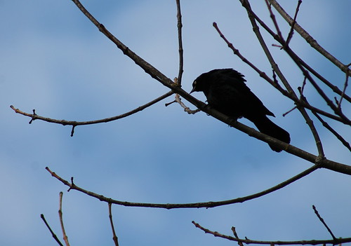 Angry bird II