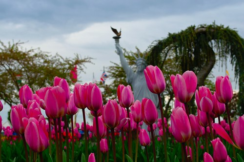 Pink Tulips & Lady Liberty