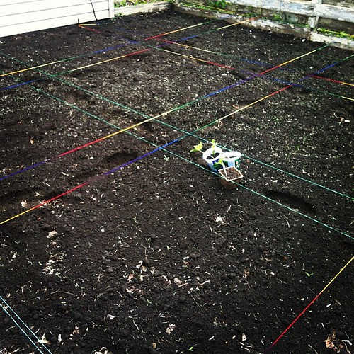 the back half of the garden is measured out (in rainbow yarn) and I'm about to plant some pumpkins