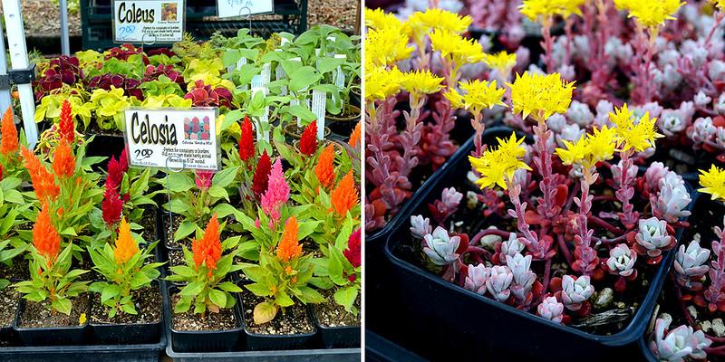 Farfmer's Market Flowers