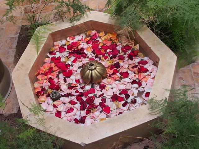 室內鋪滿玫瑰花瓣的小水池