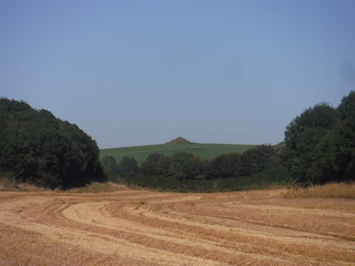 Clandon Barrow from Grove Hill Bottom