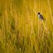 A birdy