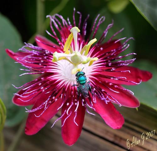 flower macro canon insect florida 5dmarkiii 100mmmacrof28lisusm