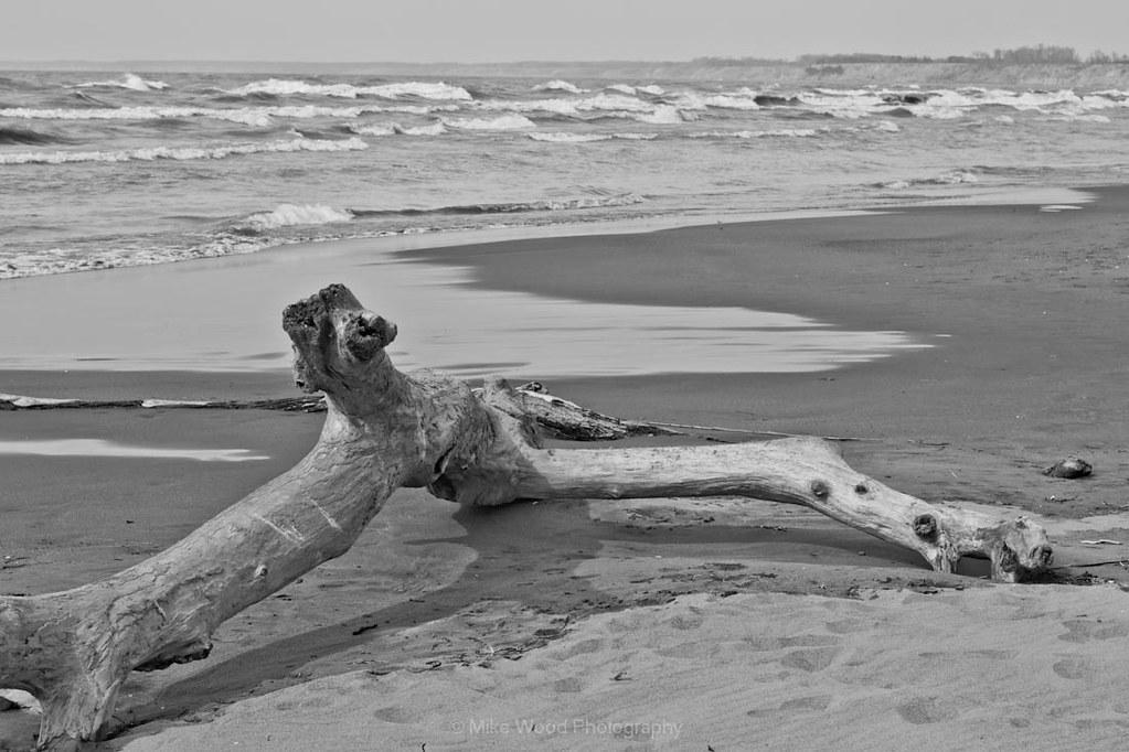 Nude Driftwood selfie   OK to me it looks like a nude - bark