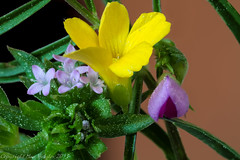 Wild Flowers Cover Photo