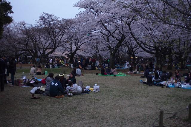0052 - Parque Yoyogi