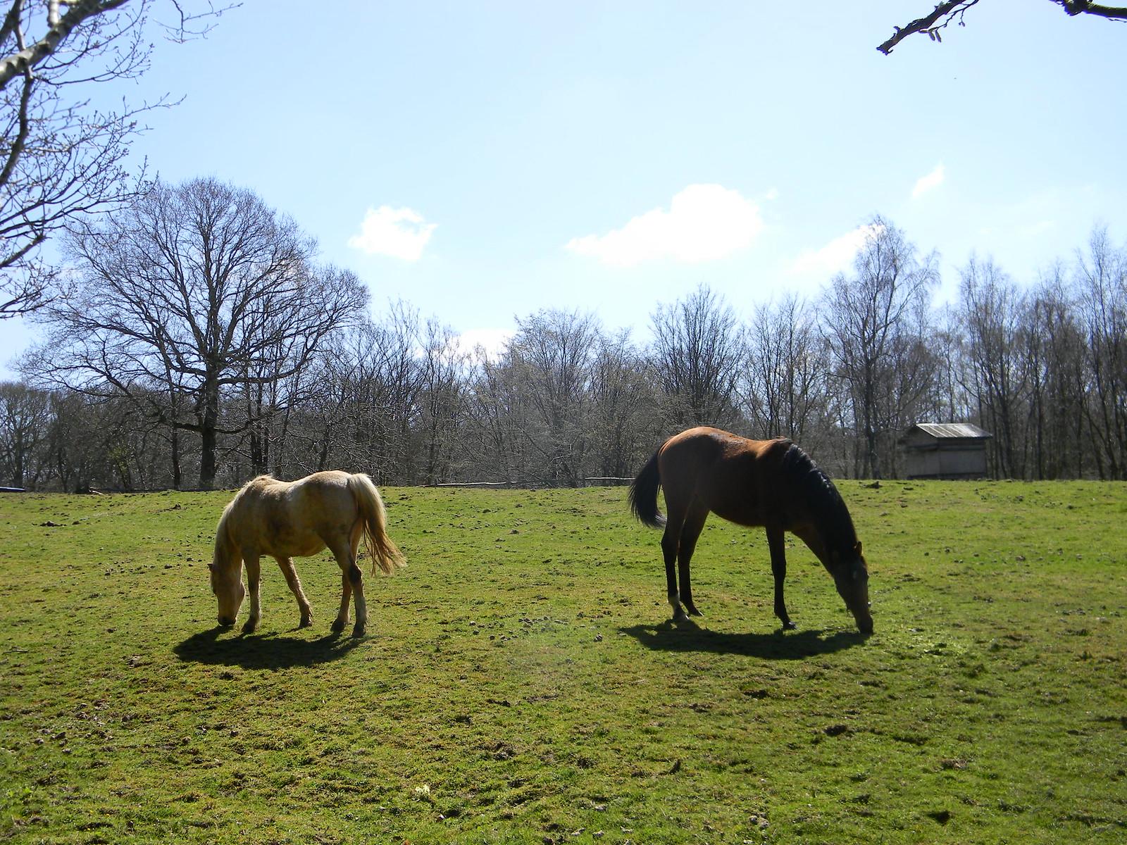 Horses In a field Robertsbridge to Battle