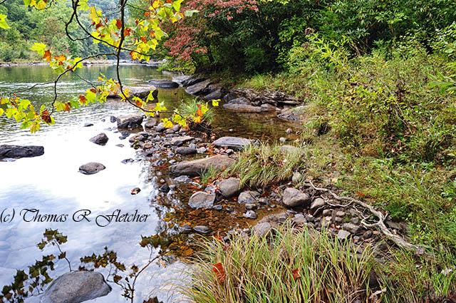 Williams River Autumn