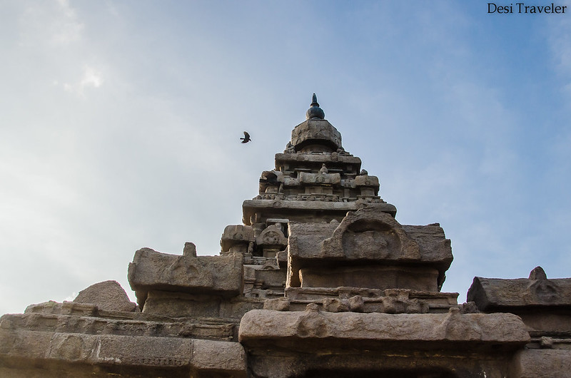 bird flying over shikhar or top of shore temple Mamallapuram