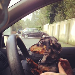 Jesus take the wheel!!! #lolathesausage