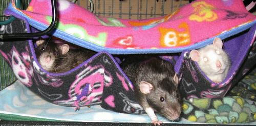 Bug, Merlin and Gizmo