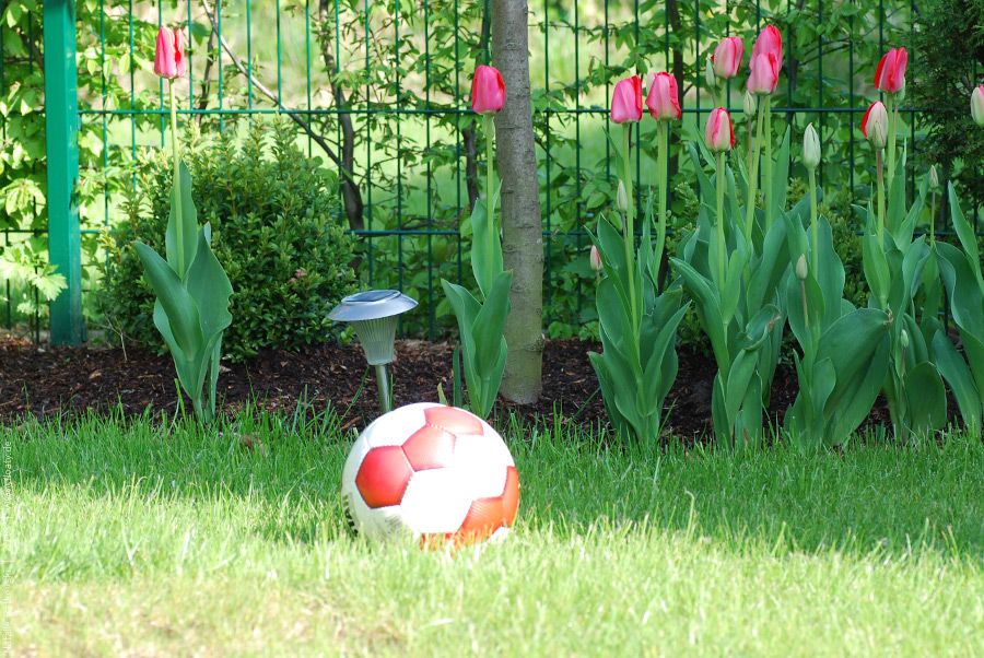 Mai im Garten