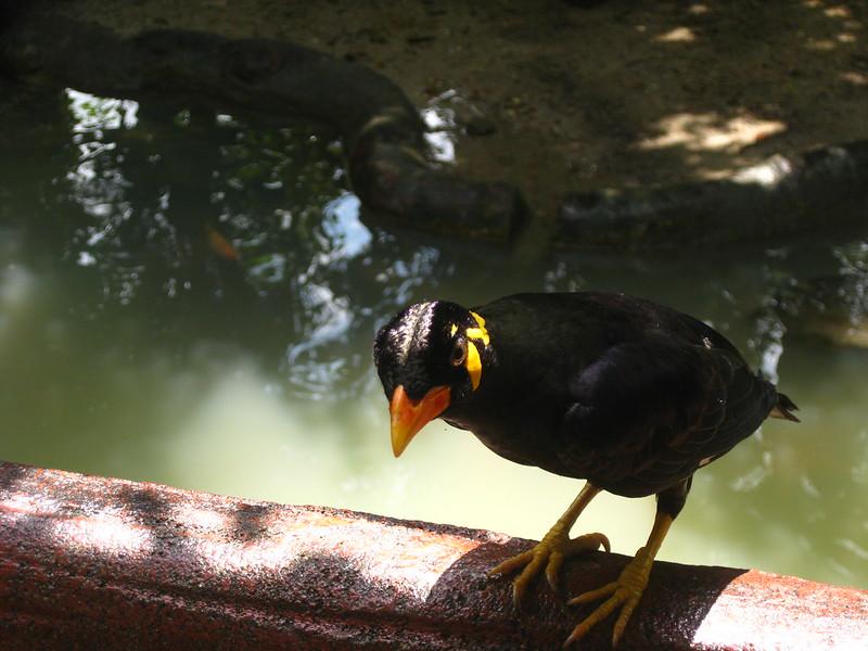 Taiping Zoo IMG_5960