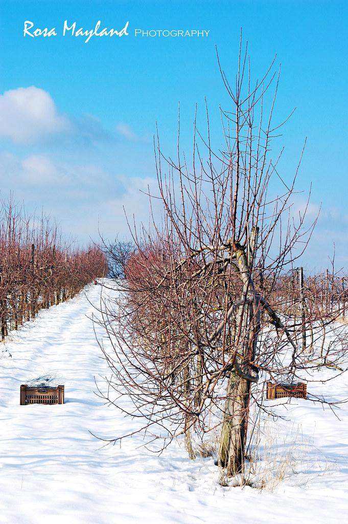Spring snow 3 7 bis