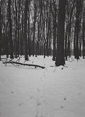 A walk in the snow in Ashridge Woods