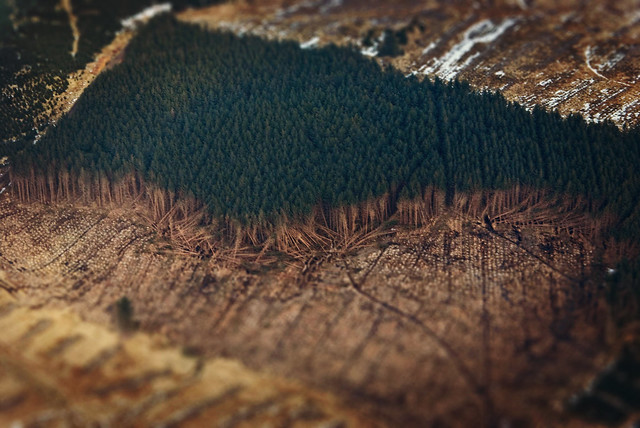 Tree tilt-shift