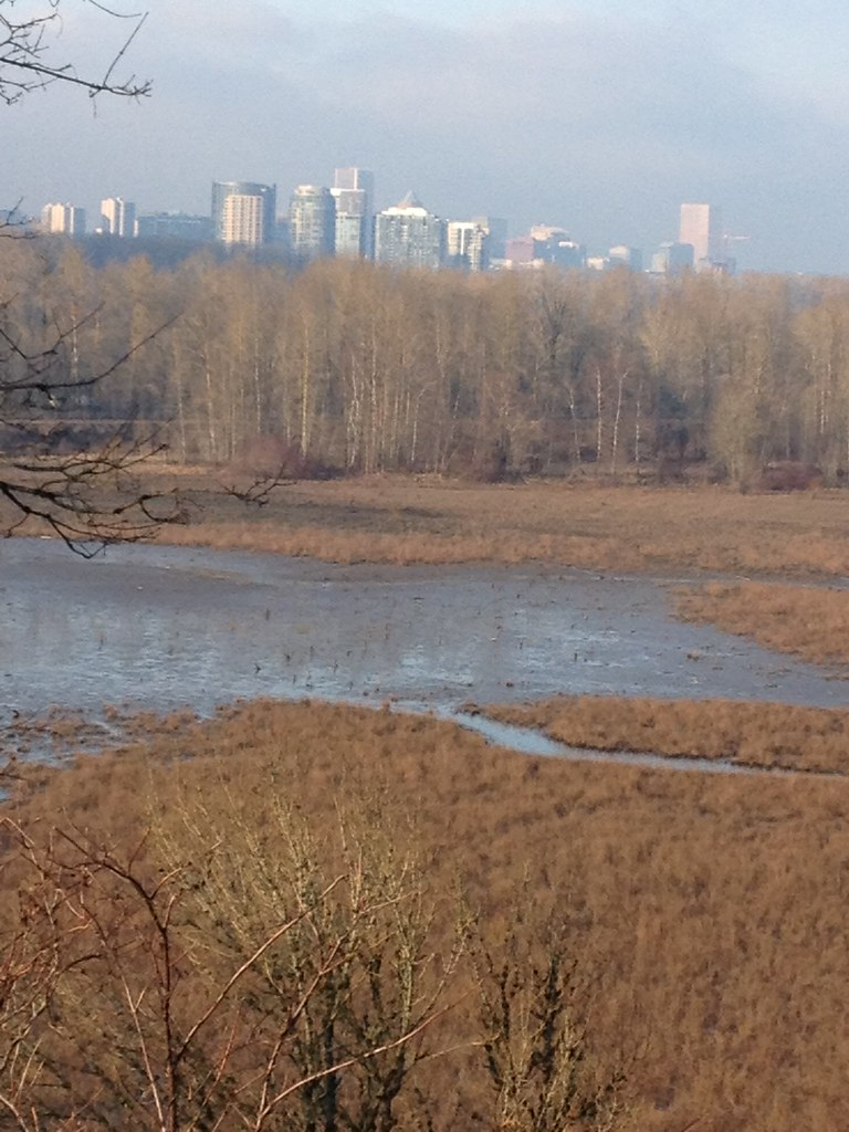 Mosquito management in urban wetlands