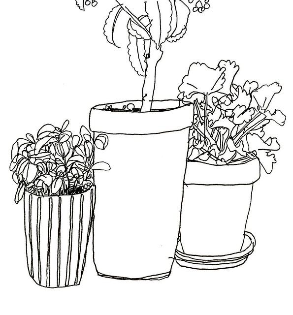 fönsterväxter