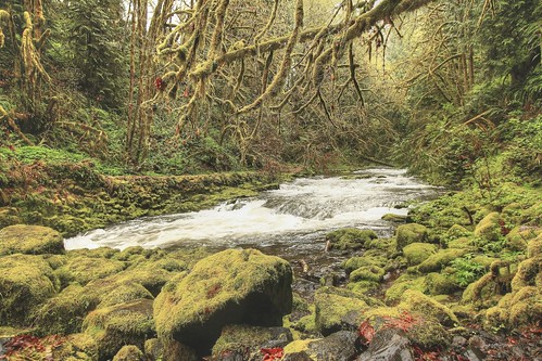 green water creek canon spring hiking pacificnorthwest lichen lush washingtonstate pnw cedarcreek mossybits imagebyterri