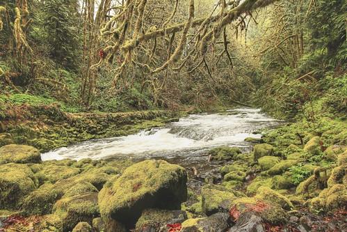 green water creek canon spring hiking pacificnorthwest lichen lush washingtonstate pnw cedarcreek mossybits imagebyterri