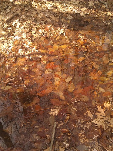 Remnants of fall in spring puddle