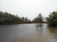 Hondenstrand Reeuwijk 3