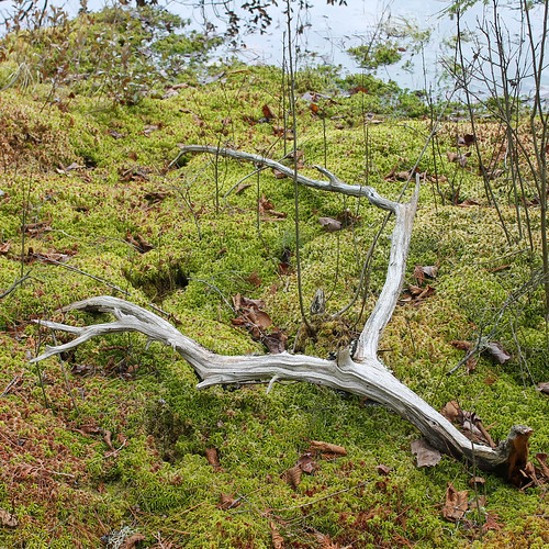 Branch in Moss Land