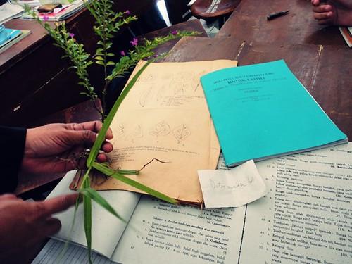 DSC05024  determinan tumbuhan