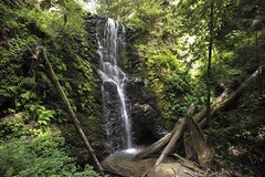 wasserfall(0.0), stream(1.0), waterfall(1.0), rainforest(1.0), water feature(1.0), old-growth forest(1.0), body of water(1.0), watercourse(1.0), forest(1.0), natural environment(1.0), ravine(1.0), state park(1.0), jungle(1.0),