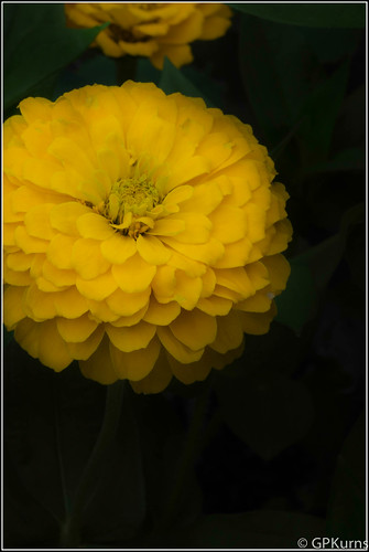 About Yellow by Gary P Kurns Photography