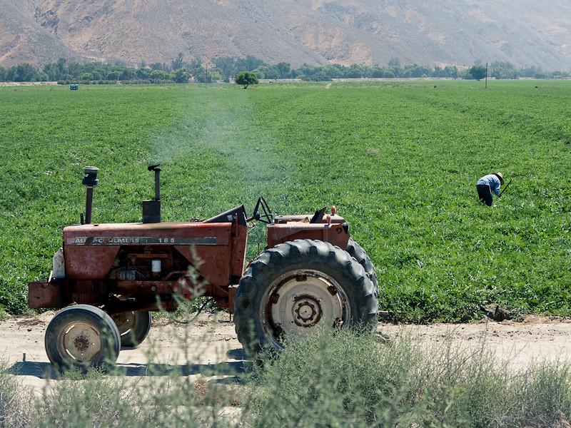 Farmer_Hemut,CA_G.LHeureux-1283