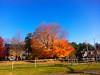 310:365 - 11/16/2014 - Big Tree
