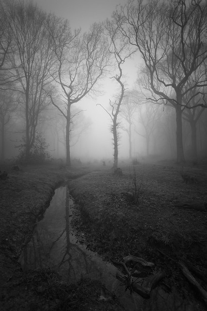 Scott Baldock - Dark Forest