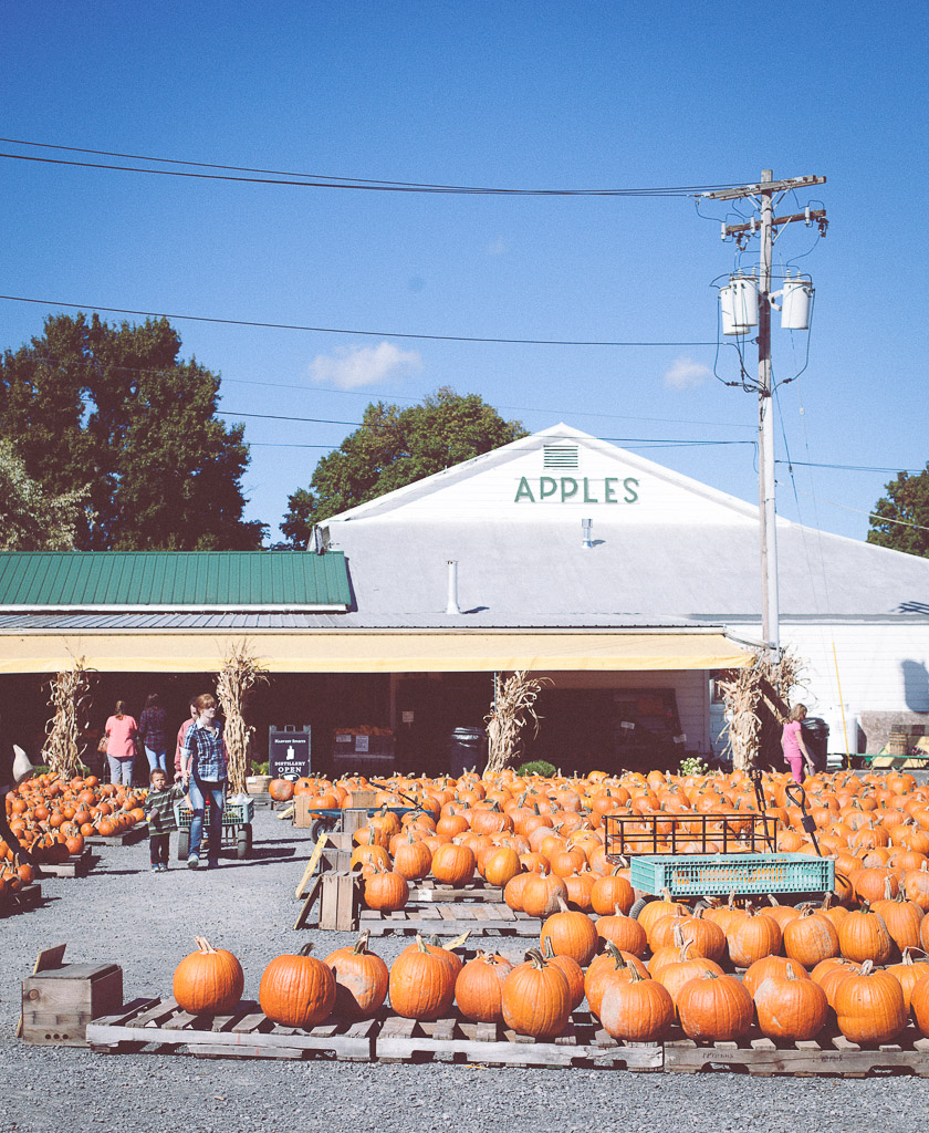 Pumpkins fall farm stand NY