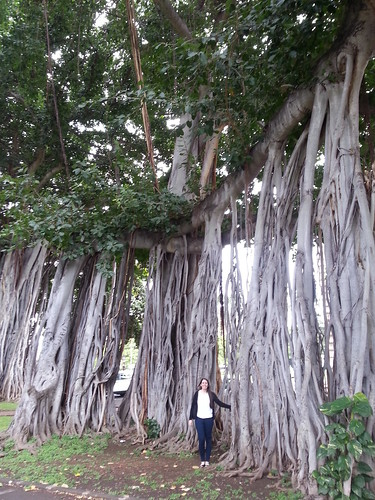 Sarah and massive banyan at Iolani Palace by ** Gudenius **