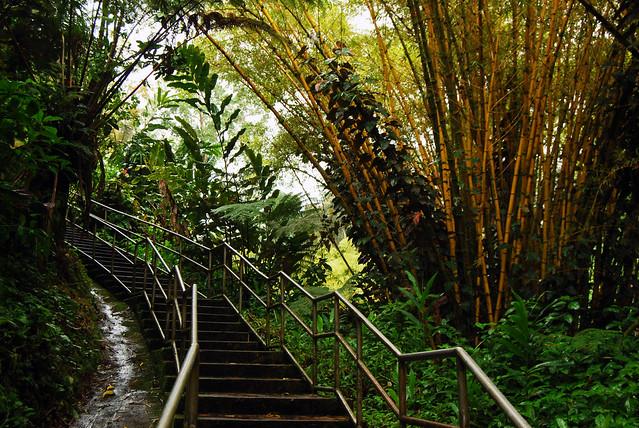 Akaka Falls Stairs