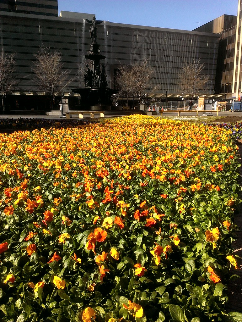 Scotts' Spring Carpet