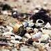 Sri Lanka, where the beach shells come alive