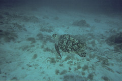 Cancun Diving 31