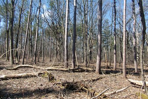 woods 026