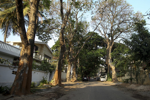 Streets lined with trees