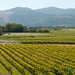 Giesen Vineyards - Marlborough, New Zealand