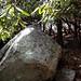 Cairns41/Symbol&Millennium Rocks