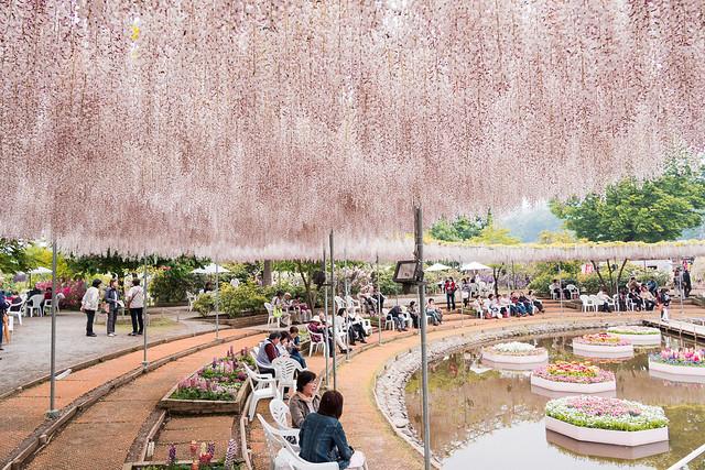 Pink Wisteria Terrace