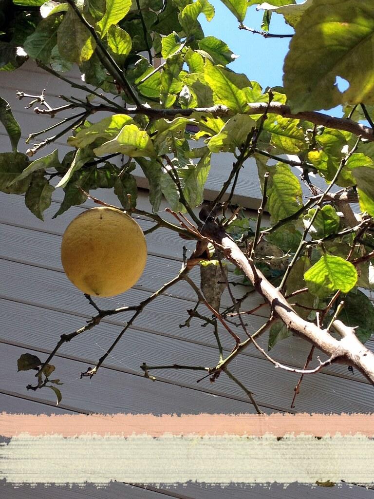 lemonbars2