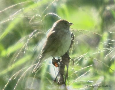 bird canon corpuschristi birding smithbtr